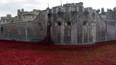 Tower of London, WWI tribute. Very poignant.