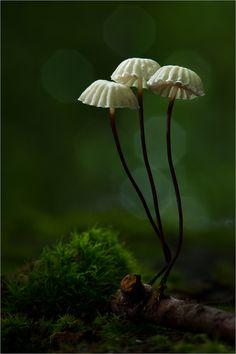 Mushrooms by Moonshroom
