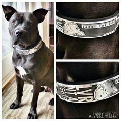 Custom collar for Mandy and #larrythedog.
