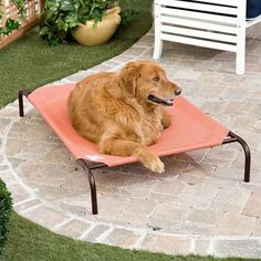 Save 65 on a portable collapsible dog wash bath tub only 3499 coolaroo deluxe dog bed terra cotta dog beds at hayneedle solutioingenieria Gallery