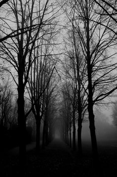 Brouillard Wood Nymphs, Lost In The Woods, Black And White Landscape, Tree Photography, Dark Places, Dark Wallpaper, Dark Forest, Paladin, Beautiful Places To Visit