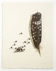 A small cycle of life. Bugs make feathers & birds; birds make bugs . Chris Maynard . featherfolio