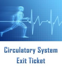 Give students a quick assessment to check their understanding of the circulatory system.