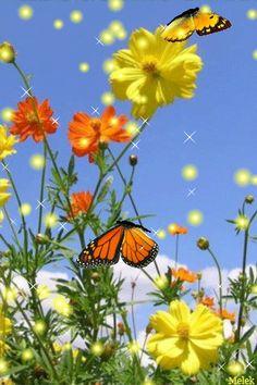 Mundo da borboleta