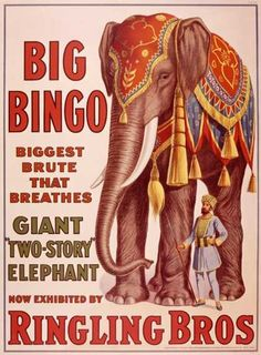 Ringling Brothers Circus: Big Bingo the Elephant