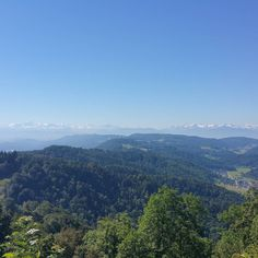 #anotherdayinparadise with a #nice #view from the #üetliberg to the #swiss #alps #biking all along the#albis and #back through the #woods of #sihlwald a #fairytale #placetobe;  #nature #healthy #landscape #journey #tourism #funny #beauty #soulfood #awareness #meditation #switzerland #attraction
