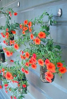 Hanging petunias planted in mason jars by nailing the flat end of a spoon, then bending the other end down then up so that you can hang the string from the mason jar mouths.