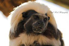 Primates: The Fearless Science of Jane Goodall, Dian Fossey, and Biruté Galdikas Dian Fossey, Jane Goodall, Orangutan, Primates, South Africa, Wildlife, Primate