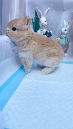 Cute Baby Bunnies, Baby Animals Super Cute, Cute Baby Dogs, Cute Little Animals, Cute Funny Animals, Cute Puppies, Cute Cats, Cute Bunny Pictures, Baby Animals Pictures