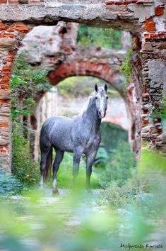 Oh my, beautiful stunning horse photography! So romantic standing in front of an overgrown grassy stone path and garden arbor of old bricks. Horse Photos, Horse Pictures, Animal Pictures, All The Pretty Horses, Beautiful Horses, Animals Beautiful, Zebras, Dapple Grey Horses, Black Horses