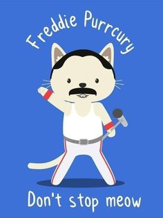 New Funny Cats Illustration People Ideas Funny Cats, Funny Animals, Cute Animals, Funny Cat Memes, Crazy Cat Lady, Crazy Cats, Gatos Cool, Cat Comics, Cat People