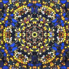 Available for sale from Heather James Fine Art, Damien Hirst, Cathedral Print - Notre Dame Silkscreen print with glazes and pearlized colors, 47 Damien Hirst Butterfly, Stained Glass Church, Art Fund, Art Advisor, Butterfly Painting, Butterfly Wallpaper, Butterfly Art, Found Art, Contemporary Art