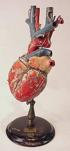 19th c model of a heart