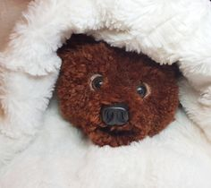 Pom pom bear Handcraft