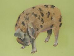 Oxford Sandy and Black pig in pastels