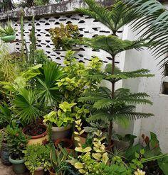 32 Likes, 0 Comments - Mimi the Hobby Gardener (@private_home_garden) on Instagram