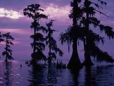 Swamp and Purple Sky, Louisiana