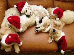 Santa Dog Pile - Move Over Santa - These Animals Wear Your Hat Better Than You - Photos Christmas Puppy, Christmas Animals, Merry Christmas, Christmas Morning, Funny Christmas, Christmas Time, Christmas Hats, Christmas Pictures, Christmas Lunch