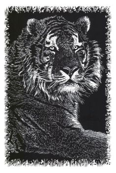 Image of a black tiger. What Image, Black Tigers, Good Books, Lion Sculpture, Statue, Black And White, Red, Hair, Animals