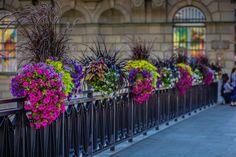 Jak ukwiecić mosty? Skrzynie kwiatowe do zadań specjalnych - Inspirowani Naturą Flower Boxes, Flowers, Cities, Plants, Decor, Window Boxes, Decoration, Planter Boxes, Plant
