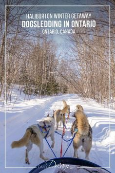 Looking to try dog sledding in Ontario? Winterdance dogsled tours provided us with a dream dogsledding experience during our Haliburton winter getaway. Winter Weekend Getaways, Canadian Travel, Canadian Rockies, Visit Canada, Canada Trip, Ontario Travel, Algonquin Park, Sleeping Dogs, Winter Activities