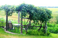 Very nice grape arbor.  want to do this in our backyard but using climbing roses and wisteria.