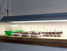 Grow healthy crops from start to finish by setting up an indoor seed-starting station.