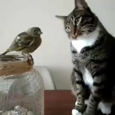 28 Astonishing Facts About Cats That will Blow your Mind Funny Animal Videos, Cute Funny Animals, Animal Memes, Cute Baby Animals, Animals And Pets, Cute Cats, Funny Cats, I Love Cats, Crazy Cats