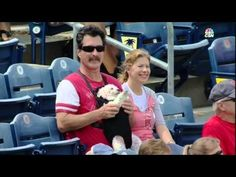 Just a Dog in a Baby Carrier Hanging With Mom and Dad at a #Baseball Game http://ibeebz.com