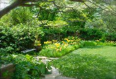 Yellow tulips in rough grass of Lower Courtyard. Chanticleer, US   --Wife, Mother, Gardener: Series