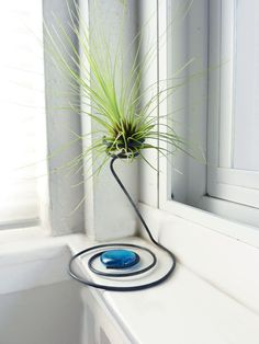 Wire Air Plant Holder Filifolia by glassetc on Etsy Más