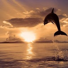 Sun set ,sea,dolphin