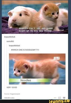 I LOVED THIS SHOW! Every time a new episode would come out I would record it or kick my whole family off the tv just to watch it! Noodles was even one of my favorite  kittens!