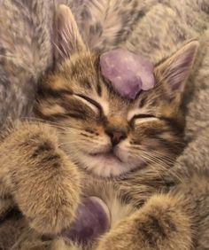 I Love Cats, Cute Cats, Image Chat, Photo Chat, Cat Aesthetic, Cute Creatures, Pretty Cats, Cute Baby Animals, Cats And Kittens