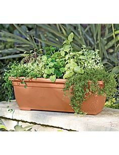 """The combination of herbs is nice (31""""  Self-Watering Trough Planter)"""
