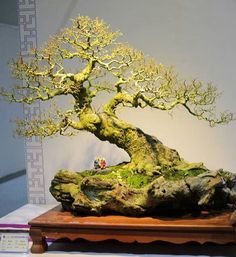 Bonsai Tree Care for Beginners Bonsai Tree Care, Indoor Bonsai Tree, Ikebana, Dwarf Trees, Plantas Bonsai, Bonsai Styles, Bonsai Garden, Wisteria Bonsai, Bonsai Pruning