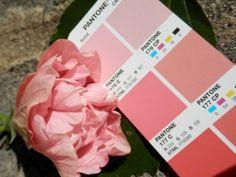 PMS 176 C Pms Colour, Pantone, Palette, Cards Against Humanity, Projects, Log Projects, Blue Prints, Pallets