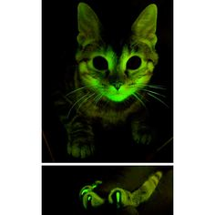 Glow in the dark AIDS resistant kitty!