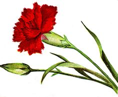 http://scout901.hubpages.com/hub/free-cross-stitch-patterns-flowers