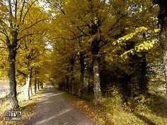 yellow lane-001043