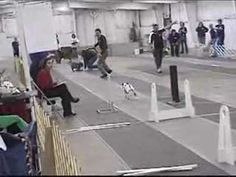 Feb 18, 2008  Flyball - FBI: Lucy, Max, Po and Jackie O, Saturday, Feb. 9 2008 in Slow Motion
