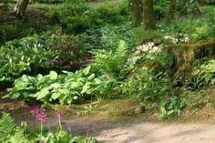 woodland gardens - Google Search