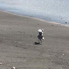 愛犬のリロです🐶 #キャンピングカー #車中泊 #アウトドア #サーフィン #サーファー #波乗り #スタンドアップパドルボード #サーフトリップ #道の駅 #車旅 #canpingcar #outdoor #canp #surfin  #sup #hawaii  #surfer #trip #海 #子犬 #sea #愛犬 #犬 #癒し #イヌ #dog #cutedog  #surfdog #trip #japan #夏