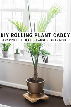 Learn how to build a DIY rolling plant caddy. Building an easy rolling plant stand is an easy way to keep large plants mobile. Learn how to build a DIY rolling plant caddy. Building an easy rolling plant stand is an easy way to keep large plants mobile. Plant Projects, Outdoor Projects, Easy Projects, Outdoor Ideas, Wood Projects, Minwax Wood Stain, Diy Plant Stand, Plant Stands, Diy Planters