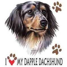 I Love My Dapple Dachshund Dog T SHIRT Item no. 827m - pinned by pin4etsy.com