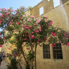 Jerusalem in Pictures: Mount of Olives & the Upper Room - Stories of Our Boys Mount Of Olives, Jerusalem Israel, Holy Land, Time To Celebrate, History Books, Wonderful Images, Boys, Pictures, Bible Readings