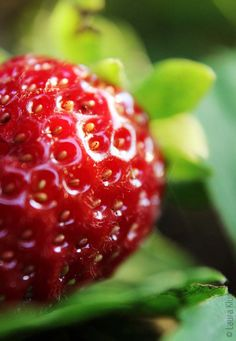 Makroaufnahme einer Erdbeere – A macro shot of a strawberry