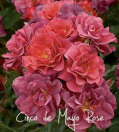 Happy Cinco de Mayo (flower style) - Pith + Vigor - Cultivating ...