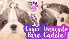 Penteado Para Cães: Coque Trançado Estiloso Para Cachorra Fácil e Rápido...