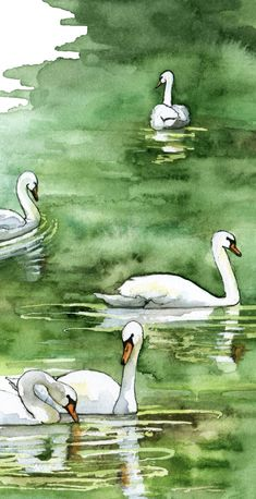 Watercolor Swan Painting